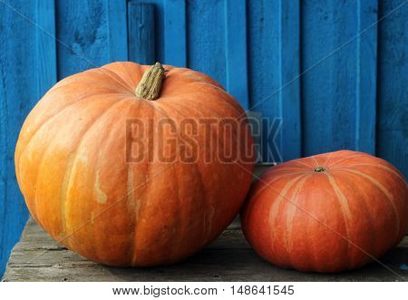 Two gourd close-up on the blue wooden background after harvest.