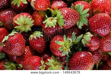 Close up of resh red natural strawberries.