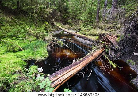 Stream running through an Ancient temperate rainforest British Columbia Canada