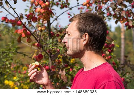 Portrait of a young man with a small red apple in his hand on a sunny day against an apple rennet tree. The sunshine is strong, the shadows are deep.