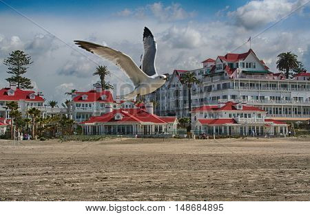 Gull photo bombing a shot of Hotel del Coronado beach in San Diego