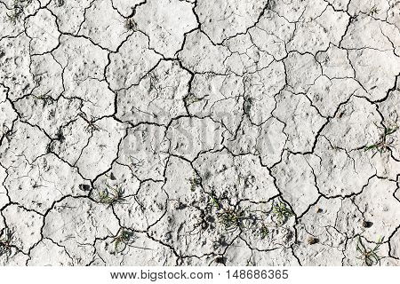 Cracked soil background. Droughtб water scarcity on soil