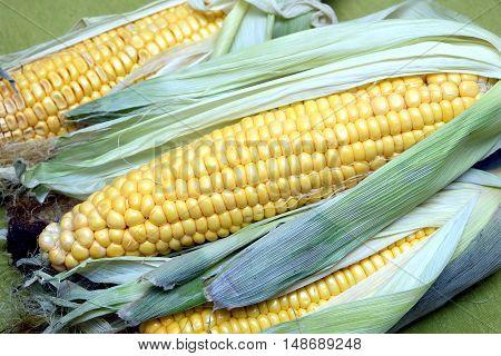 Ripe raw corn on the cob on greem tablecloth horizontal top view closeup