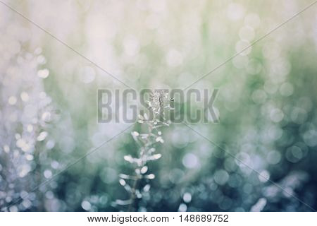 Abstract natural background with bokeh, vintage blue and green color. Nature texture summer meadow twilight, selective focus.