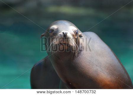 Really cute face of a California sea lion.