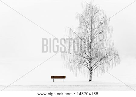 horizontal winter image of one weeping white willow tree with a park bench beside it with a white background