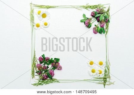 Frame Of Clover And Chamomile And Green Field Grass