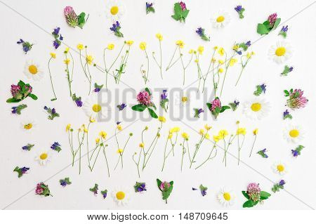 Frame Of Ranunculus Clover Chamomile And Field Flowers On White