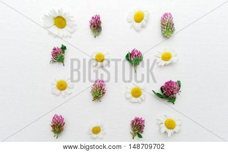 Frame With Clover And Chamomile