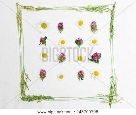 Frame With Clover And Chamomiles And Field Grass