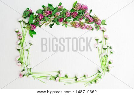 Wreath Of Clover And Daisy On White