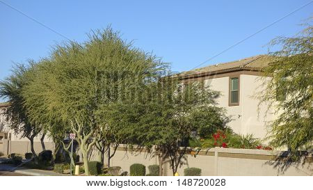 Arizona warm winter in gated residential community of Metro Phoenix as seen from a public street