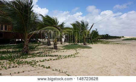 wooden beach hut on cap verde on sal island