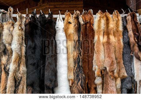 Furs for sale, Tanned hides in fur shop