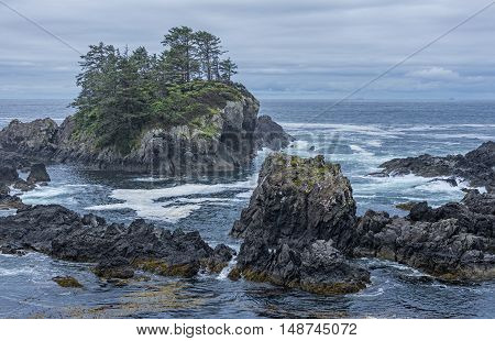 West coast Vancouver Island near Ucluelet British Columbia Canada on the Wild Pacific Trail