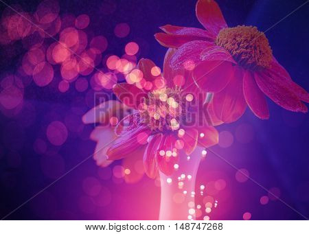 flower background with bokeh lights abstract. .