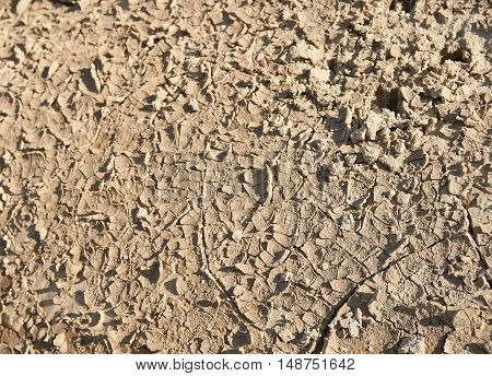 Dried ground texture texture of the crackled clay arid land