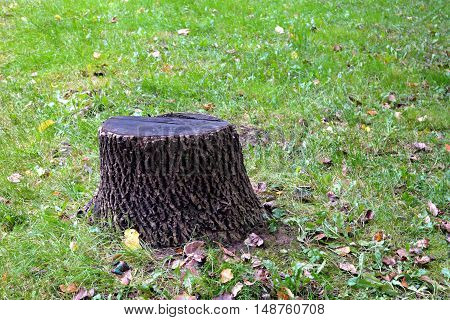 a tree stump in the woods on a summer day lawn