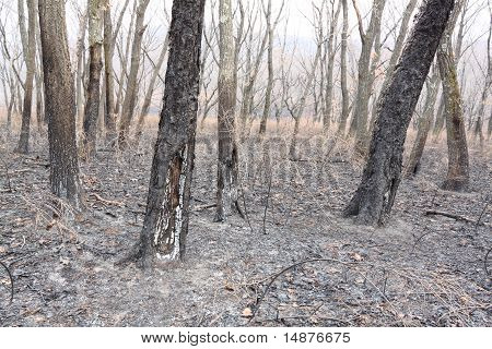 Wood After  Fire