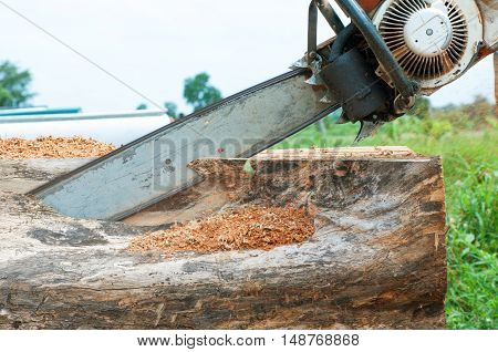 a man cutting a tree with a chain saw