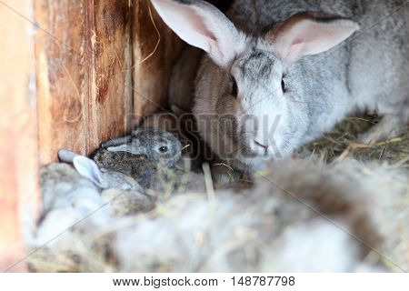 Adorable young bunny iat farm house. Cute small rabbit in hutch