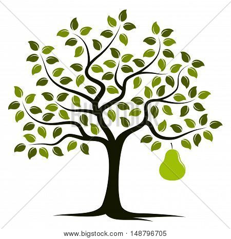 vector pear tree with one big pear isolated on white background