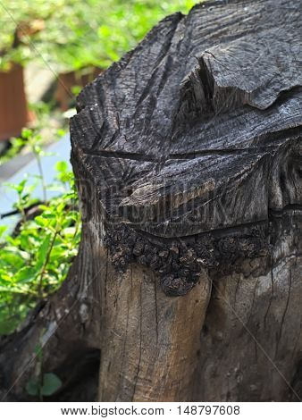 closeup shot of an old stump or tree stump in a park
