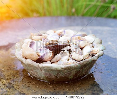 Detail of mussles decoration in dish with sun rays and garden background.