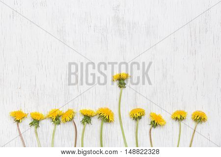 Dandelions on wooden white background. Top view. Spring Summer concept. Flowers on white background.