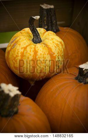 Autumn pumpkins for sale at farm shop