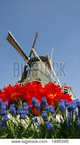 Windmill & Flowers