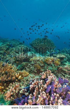 Beautiful underwater colored coral reef garden background