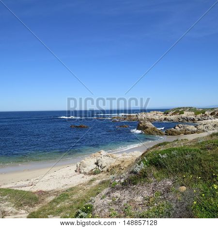 This is an image of wild flowers and sand at Asilomar Beach in Pacific Grove, California.