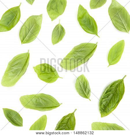 Fresh Sweet Basil Leaves Isolated On White Background. Sweet Basil Leaves With Top View .