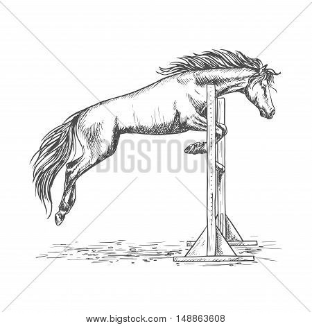 White horse racing and jumping over barrier sketch portrait. Trained mustang stallion on hippodrome sport horse races