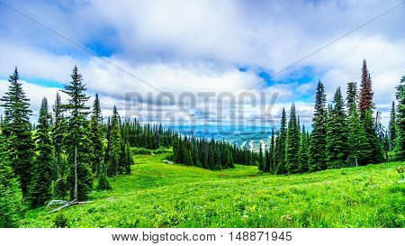 View of the forest and meadows of Tod Mountain in the Shuswap Highlands of British Columbia, Canada