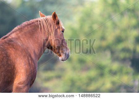 Brown horse in field outdoor