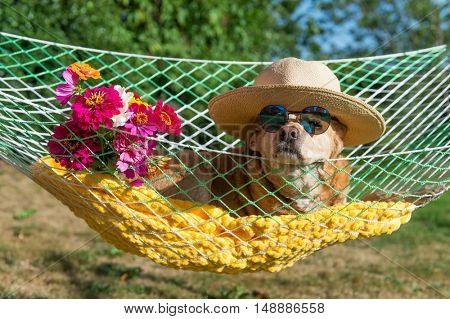 Dog with sunglasses and flowers in hammock