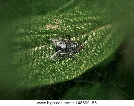 Fly on a plant leaf as an illustration