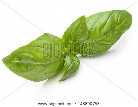 Sweet basil herb leaves isolated on white background closeup