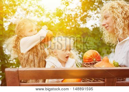 Mother and children harvesting Hokkaido pumpkins in garden in autumn