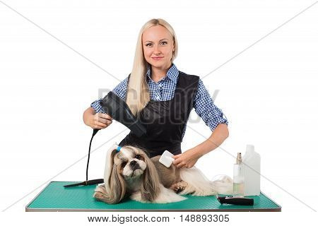 Beautiful smiling woman groomer combing cute shih-tzu dog - isolated on white