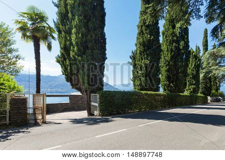 cypress trees and hedges on a road