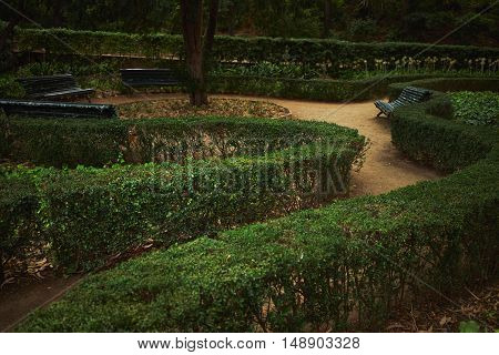 Green labyrinth with dirt paths in a park in the evening