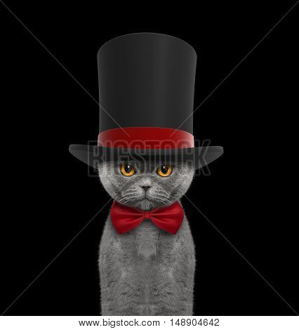 Cute cat in a high hat cylinder and necktie -- isolated on black