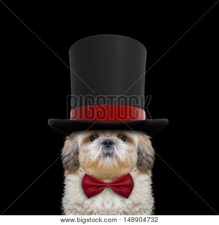 Cute dog in a high hat cylinder and necktie -- isolated on black