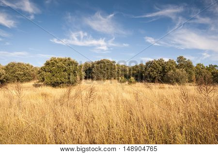 Mediterranean forest at autumn. Holm Oak forest and dry pasture at Guadarrama Mountains, Madrid, Spain