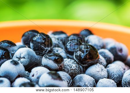 Frozen aronia chokeberry berries in a bowl powerful antioxidant fruit