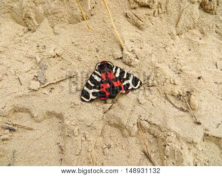 Beautiful butterflyon on a sand on summer