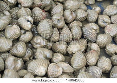 Top View Of Fresh Shellfish Cockles Background